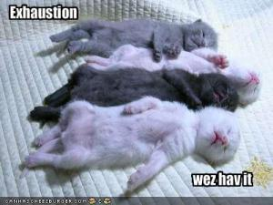 funny-pictures-little-kittens-are-exhausted